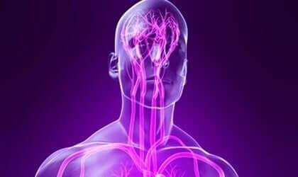 体性神経系 特徴 機能