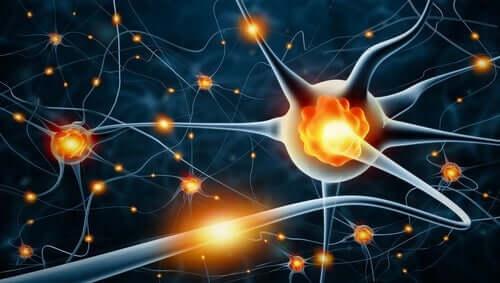 脳 可塑性 特徴 タイプ