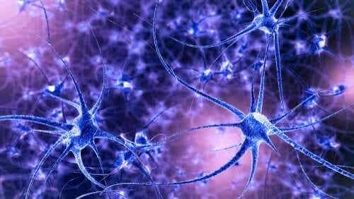 脳の可塑性:特徴とタイプ