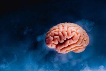 脳 島皮質 痛み 経験 学習