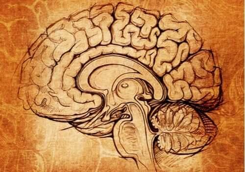 レンズ核:学習とモチベーションの支柱