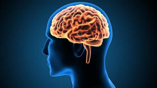 脳の帯状回とその機能について