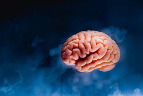 脳髄の解剖学