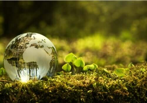 どうすれば環境保護に貢献できるか