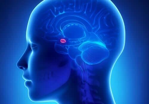 扁桃体と不安:その繋がりは?