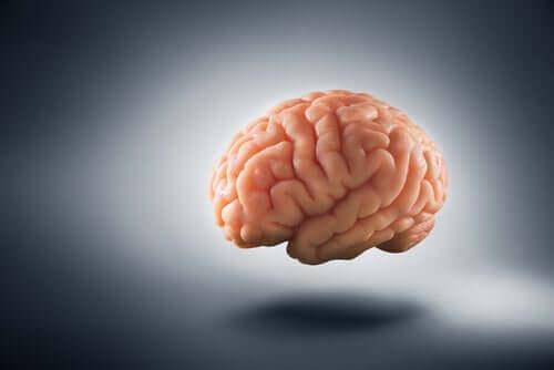貧困 脳 変化