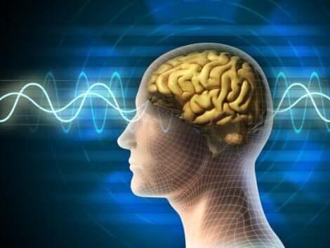 脳 睡眠サイクル