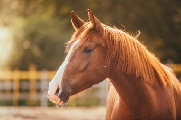 馬に対する恐怖心、ヒッポフォビアについて