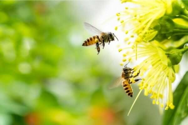 アピフォビア、ハチ恐怖症の症状について