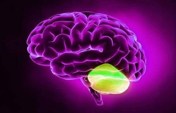 小脳と拡散的思考との関係性とは?