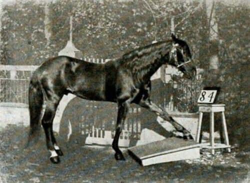 クレバー・ハンス、算数の計算ができる馬