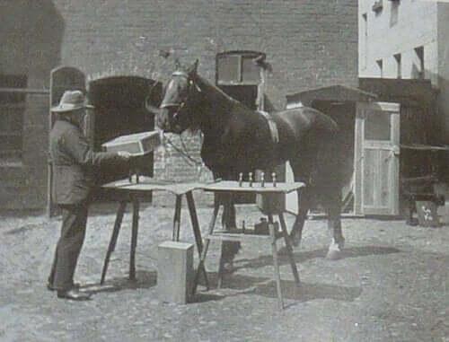 クレバー・ハンス 算数の計算ができる 馬