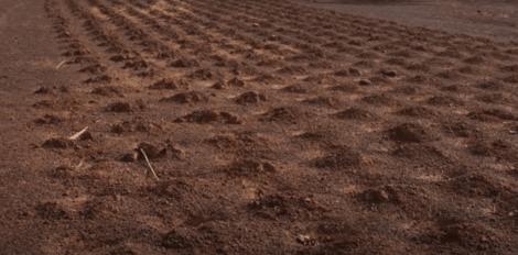 ヤコバ・サワドゴ、サハラ砂漠に打ち勝った人物