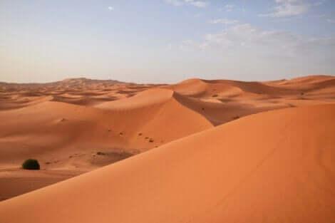 ヤコバ・サワドゴ サハラ砂漠に打ち勝った人物