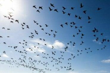 鳥恐怖症を自分の力で克服する3つの方法