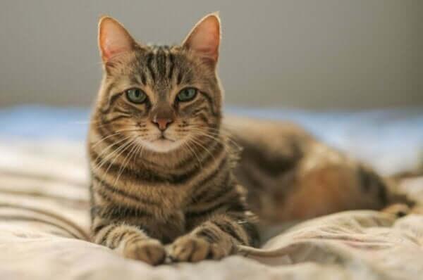 アイルロフォビア 猫恐怖症 原因 治療