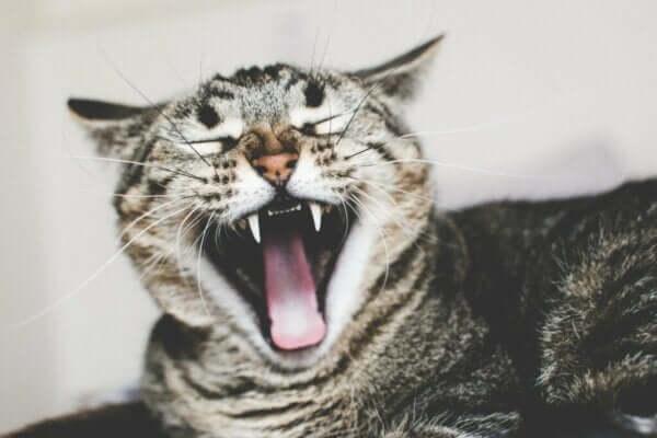 アイルロフォビア(猫恐怖症)の原因と治療について
