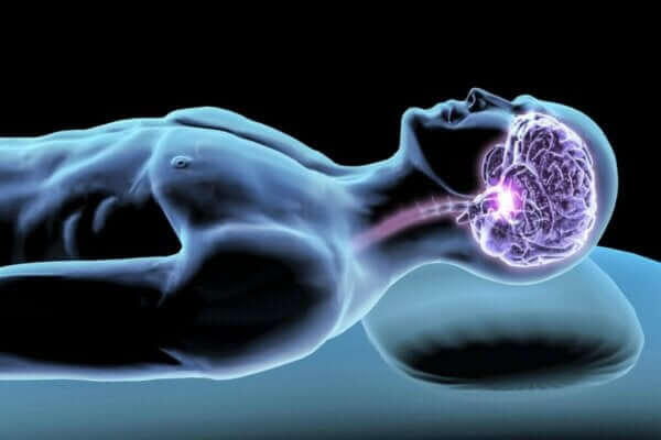 睡眠ホルモン:夜間の睡眠を調整する因子