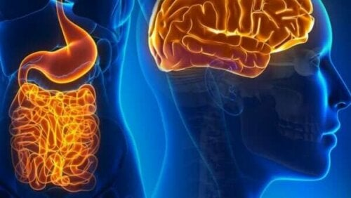 さまざまな機能を持った腸管神経細胞について知ろう!