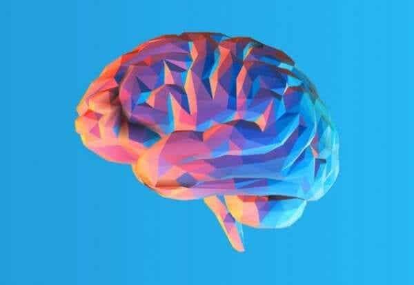 人間の脳にシワがあるのは何のため?