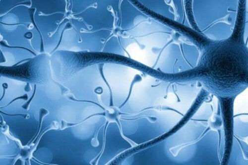 神経細胞 殺す 習慣